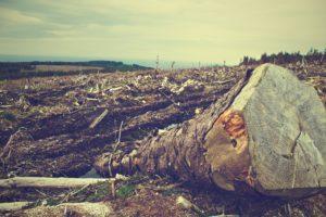 deforestation-405749_1920