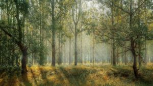 forest-1072828_1920